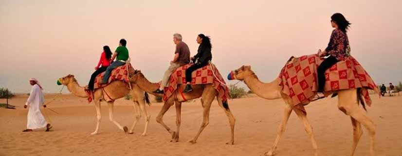 desert safari dune bashing and camel riding